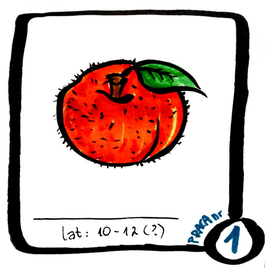 projekt3030-praca-1-warzywniara