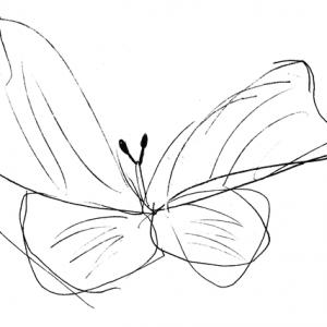 motylek-mały